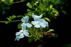 Random Flower (daesup22) Tags: sony ilce7m3