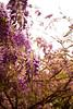 El patio de mi casa es particular. (danircastillo) Tags: canon eos7d 7d primavera flor color violeta verde morado naturaleza filtro