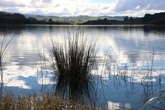 Reeds on the water (Karen Pincott) Tags: laketutira water lake winter reeds newzealand hawkesbay clouds reflections