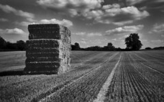 Harvest (Dave.Miles) Tags: zeiss zeissikonikonta5212 ilford ilfordfp4plus epsonv550 ilfotecddx 120film mediumformat 6x9 film filmisnotdead field halfpennygreen harvest haystacks