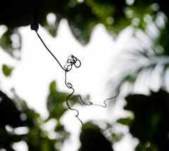 DSC_0501 (yakovina) Tags: silverseaexpeditions indonesia papua tritonbay
