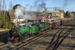 Farewell Pig 42 (Tom Marschall) Tags: mossvale newsouthwales australia au 35 3526 36 3642 nanna nanny pig steam locomotive kettle