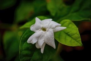 Flowers today in my garden