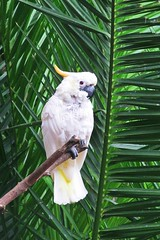 white parrot :) (green_lover (your COMMENTS are welcome :))) Tags: cockatoo parrot birds animals junglepark tenerife canaryislands spain palm white zoo