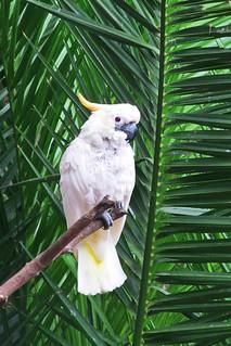 white parrot :)