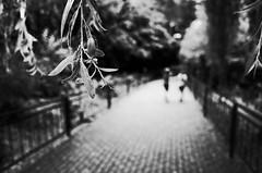 On a bright path (stefankamert) Tags: stefankamert street bright path way highlights blur blurry dof bokeh plant people tones noir noiretblanc blackandwhite blackwhite ricoh gr grii vision