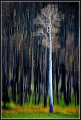 Vangoo (VegasBnR) Tags: nikon sigma nationalpark nature usa utah tree trees gimp vegasbnr geo geografics lake meadowvalley reflection art forest abstract