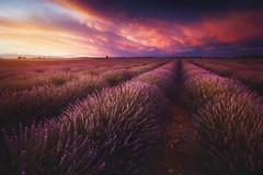 Allemagne-en-Provence (jonathan le borgne) Tags: lavande lavander field flowers colors sunset sky clouds red violet yellow orange lavandin europe france allemagneenprovence canon6d canon1635liif28usm
