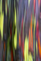 rain·bow I (IanLudwig) Tags: vsco sony ilce7rm2 sonyilce7rm2 a7rii sonya7rii sonyalpha sonyalphaa7rii hawaii kauai aloha longexposure rainbow eucalyptus rainboweucalyptus sel2470gm