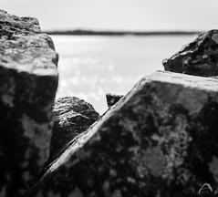 Sea View (Sharkland) Tags: water sea rock sten granit granite hav motljus nikon d750 sweden öregrund uppland glitter bokeh stenmur havet öregrundsgrepen backlight skärgård archipelago landscape landskap ahlén