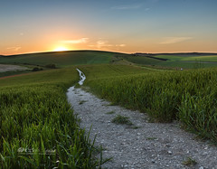 Down the stoney road (Through Bri`s Lens) Tags: sussexdowns lancingring sunset crops poppies path track brianspicer canon5dmk3 canon1635f4 lee09softgrad