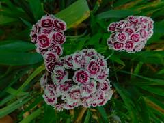 Flowers at Grunewald Guid (Pictoscribe) Tags: pictoscribe grunwald guild plain wa 98826 lutheranart nature siritualretreat