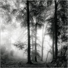 Tranquility (Eva Haertel) Tags: eva haertel canon 5dmarkiii forest tree laub foliage schwarzweiss sw bw blackandwhite roud stille tranquility verträumt dreamy struktur structurwe silhouette licht light schatte shadow quadrat wetter weather mülheim germany