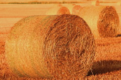 Bales Of Hay (acwills2014) Tags: bales rolling hay straw harvest gold golden textures countryside