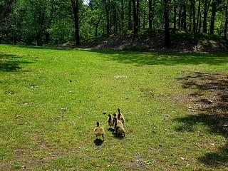 Serenity and new life at the beautiful Centerparcs kempervennen. #newbornshoot #newlife #animals #littleones #nature #circleoflife #natuur #beauty