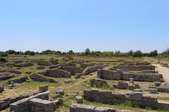 IMG_4947 Paestum (drayy) Tags: paestum rome roman ancient magnagraecia temple town italy europe campania greek