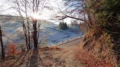 Lever de soleil hivernal vers le Bâa (ViveLaMontagne67) Tags: landscape france vosges hills frost sun sunrise soleil givre collines feuilles hiver winter leaves trees 250v10f