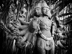 Under the Banyan Tree (f.albertowilson) Tags: hawaii kauai hindu monastery banyan tree sanctuary statue lordshanmuga travel blackandwhite bw panasonic g85 lumix fotocompetitionbronze fotocompetition
