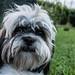 Dog portrait IV