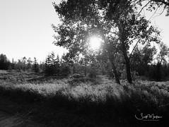 DSCF3713 (Scott Martin Calgary) Tags: fishcreekprovincialpark calgary alberta canada ca blackwhite fujifilmxe2 trees