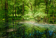 Spring Pond (Youchun Yao) Tags: pond spring tree woods