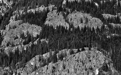 A Face of a Man on a Mountainside (Black & White, North Cascades National Park Service Complex) (thor_mark ) Tags: azimuth258 blackwhite bonanzamassif capturenx2edited cascaderange centralnorthcascades colorefexpro day6 evergreentrees evergreens hillsideoftrees lakechelannationalrecreationarea landscape lookingwest mountainside nature nikond800e northcascades northcascadeslodgeatstehekin northcascadesnationalparkcomplex northcascadesnationalparkservicecomplex outside pacificranges project365 trees triptonorthcascadesandwashington lakechelannationalrecreation washington unitedstates