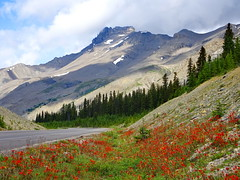 Indian Paintbrush wildflowers and the Rockies (+1) (peggyhr) Tags: peggyhr indianpaintbrush wildflowers mountains road trees sunlight shadows ditch dsc09160a banffjasperhwy alberta canada carolinasfarmfriends thegalaxy super~sixbronze☆stage1☆ thegalaxystars level1pfr