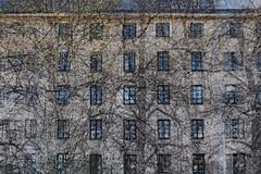 Structures 71 (pni) Tags: wall window tree urheilukatu idrottsgatan building multiexposure multipleexposure tripleexposure helsinki helsingfors finland suomi pekkanikrus skrubu pni