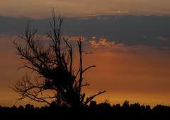 Sunset Oostvaardersplassen Lelystad