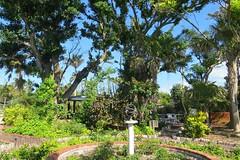 Key West (Florida) Trip 2017 7618Rif 4x6 (edgarandron - Busy!) Tags: florida keys floridakeys keywest keywestgardenclub westmartellotower plants