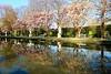 Wasserspiegelung im Palastgarten in Trier (Antje_Neufing) Tags: trier palastgarten rheinlandpfalz deutschland park spiegelung wasserspiegelung reflection magnolienbäumen magnolie bäume natur pause sonne morgens ruhe stille einsam genus romantisch