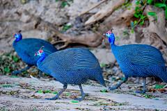 DSC_8787-2 (paul mariano) Tags: paulmarianocom paul mariano allrightsreserved namibia wildlife photography animals africa