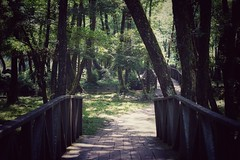 Relo Bosne Park (ibndzerir) Tags: 50mmf18 landacape sonya6500 jun2018 bosnaihercegovina sarajevo wood bridge most river park ilidza vrelobosne