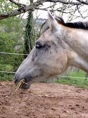 102_0370 (Cassiopée2010) Tags: cheval