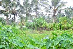 DSC_5897 (madelinedahm) Tags: urbanflooding srilankaflood srilanka colombo kelaniganga floodplain drainagedisaster risk reduction iwmi