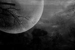 [ .   TILTING AND THE MOON  .] (ǝlɐǝq ˙M ʍǝɥʇʇɐW) Tags: windmills tilting sky blacktexassky the moon la luna space bw black white grey matter lookup trees winter