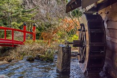 Old Style (jenni 101 - basically off until July) Tags: 2652 52weekchallange hobart japanesegardens oldstyletechnology royalbotanicalgardenshobart tasmania technology waterwheel photographybyjen