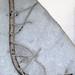 Cyathocrinites parvibrachiatus (fossil crinoid) (Mississippian; Crawfordsville, Indiana, USA) 4