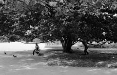 Il y a juste les pigeons qui peuvent rester bien droit... (woltarise) Tags: paris jardindesplantes france arbre pigeons passants argentique film fuji acros100 télémétrique leica m6