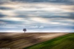 Semplici linee (SDB79) Tags: molise ururi albero tramonto campagna terra panorama