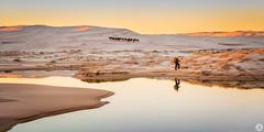 Waterhole (John_Armytage) Tags: annabay portstephens nelsonbay sanddunes sunset landscape reflections camels waterhole johnarmytage nikond850 nikon2470 nisifilters
