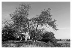 Megalithic grave (mechanicalArts) Tags: gaarzerhof dolmen grossteingrab rerik megalithic grave ostsee baltic sea grossteingräber 3000 bc