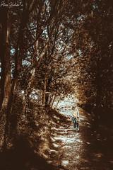 Camino al Naranco I (Álvaro Hurtado) Tags: nikon d7200 sigma naturaleza nature paisaje landscape asturias españa spain oviedo monte mount naranco chica girl verano summer árboles trees camino road cielo sky luz light azul blue marrón brown