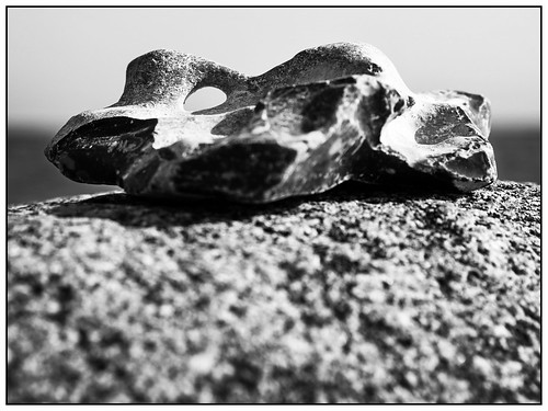 Adder stone at the Baltic Sea