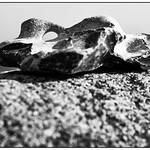 Adder stone at the Baltic Sea thumbnail