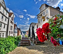 Roses in the city (Tobi_2008) Tags: rosen roses stadt town marburg hessen deutschland germany allemagne germania häuser houses himmel sky