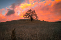 Lone Tree Silhouette! Winter Storm Breaking Malibu Creek State Park! Brilliant Sunset Clouds Malibu Canyons Fine Art Landscape Photography! Colorful Red Yellow Orange Clouds!  Sony A7R2 Carl Zeiss Sony Vario-Tessar T* FE 16-35mm f/4 ZA OSS Lens! McGucken (45SURF Hero's Odyssey Mythology Landscapes & Godde) Tags: winter storm breaking malibu creek state park brilliant sunset clouds canyons fine art landscape photography colorful red yellow orange sony a7r2 carl zeiss variotessar t fe 1635mm f4 za oss lens sel1635z e mount mcgucken