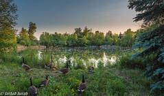 (Farhad Harati) Tags: lakes canadageese nikon landscape summer ontario greenscene