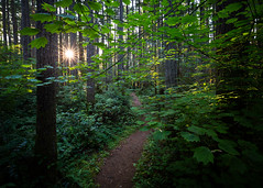 Follow The Light (John Westrock) Tags: nature sun forest trees path trail hiking evening tigermountain issaquah washingtonstate pacificnorthwest canoneos5dmarkiii canonef1635mmf4lis johnwestrock