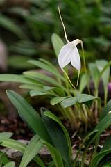 (Le Méhauté Sébastien) Tags: equateur plante fleur tropicale